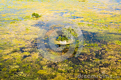 Island in the Okavango Delta seen from a heli