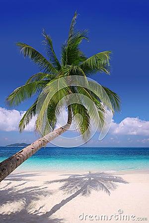 Island Paradise#2