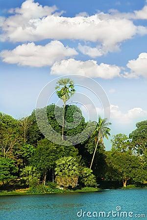 Island in tropics