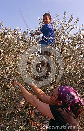 An ISM volunteer and a Palestinian child in an olive grove. Editorial Photo