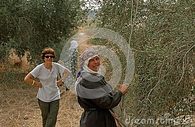 ISM volunteer and Palestinian women working in an olive grove. Editorial Image