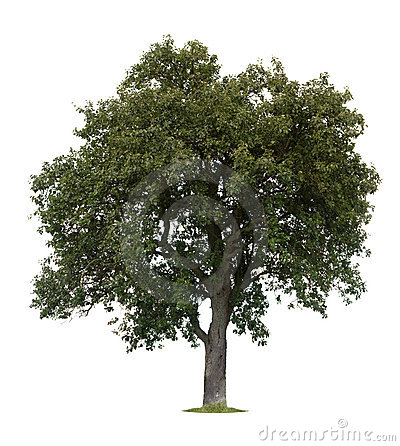 Free Isolated Apple Tree Royalty Free Stock Image - 6206126