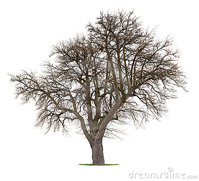 Free Isolated Apple Tree Stock Photography - 8866102