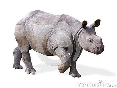 Isolated Baby Rhino