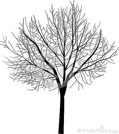 Isolated bare tree illustration