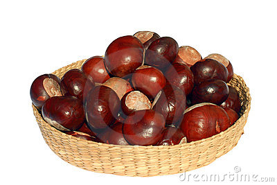 Isolated Basket of Chestnuts