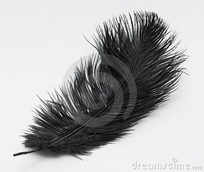 Isolated Black Feather