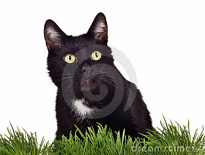Isolated black green-eyed cat in green grass