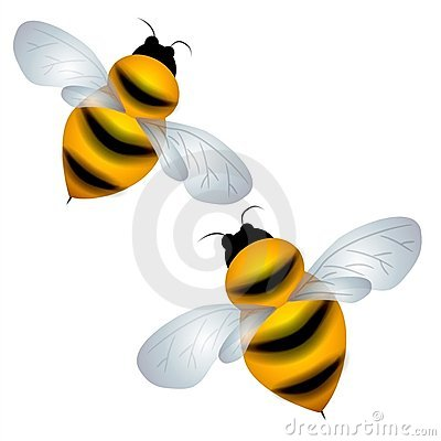 Isolated Bumble Bees Flying