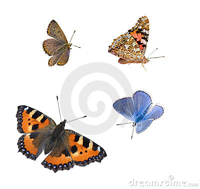 Free Isolated Butterflies Royalty Free Stock Images - 17493599