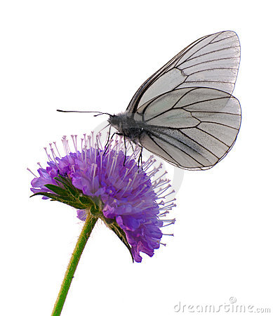 Free Isolated Butterfly Stock Photography - 20086922
