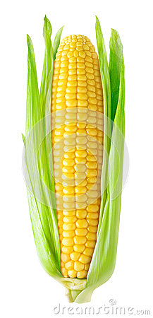 Free Isolated Corn Ear Royalty Free Stock Photography - 96577137