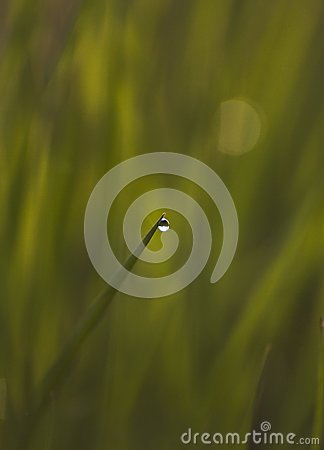 Isolated dewdrop