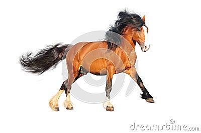 Isolated draft horse