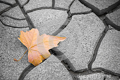 Isolated dry leaf on dry ground