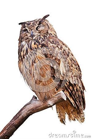 Free Isolated Eagle Owl Royalty Free Stock Photos - 23220188