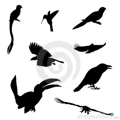 Isolated exotic birds vector illustration