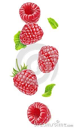 Free Isolated Falling Raspberries Stock Photo - 103702520