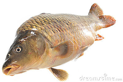 Isolated fresh carp