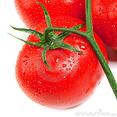 Free Isolated Fresh Tomatoes Royalty Free Stock Images - 22901759