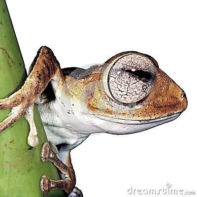 Isolated frog
