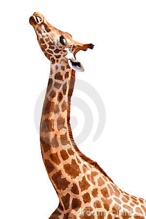 Free Isolated Giraffe Stock Images - 4625594