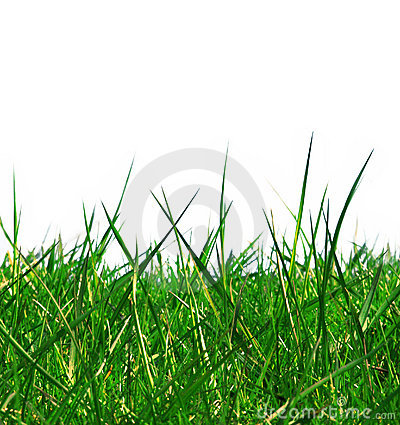 Free Isolated Green Grass Royalty Free Stock Photos - 403678