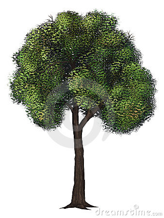 Isolated Green Tree - Digital Painting