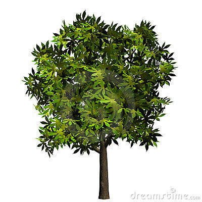 Isolated green tree plant leaves