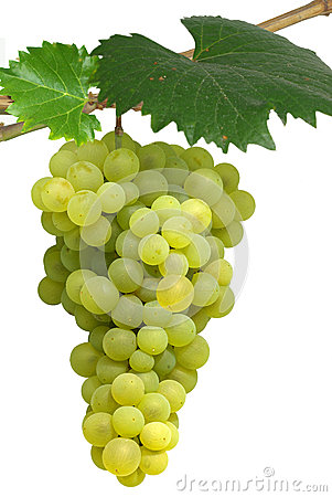 Isolated hanging grapes