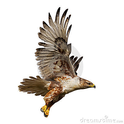 Free Isolated Hawk In Flight Stock Image - 5391621