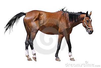Isolated horse