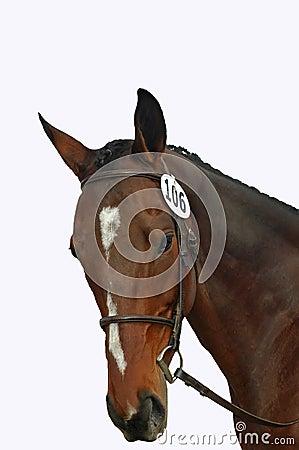 Isolated Horse Head