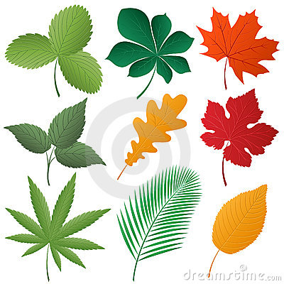Isolated image of a leaves