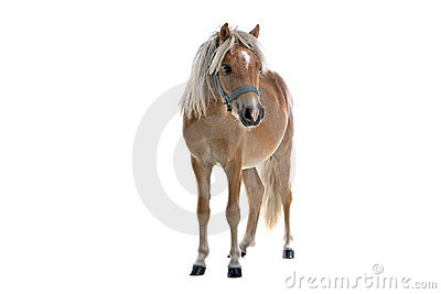 Isolated light brown horse
