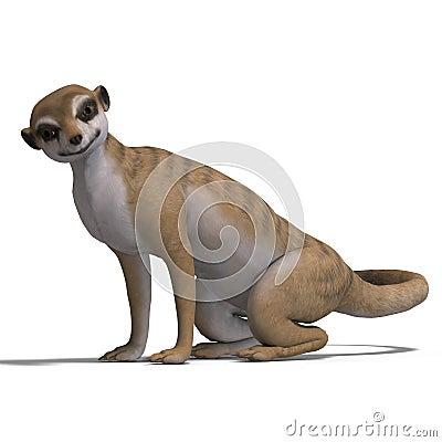 Isolated meerkat