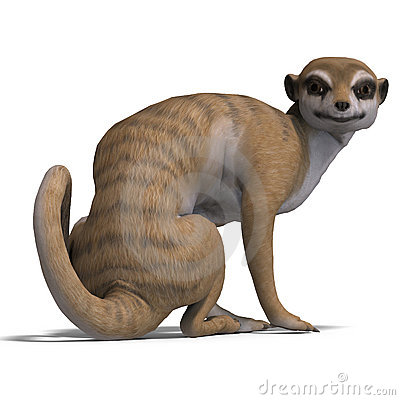 Isolated meerkat