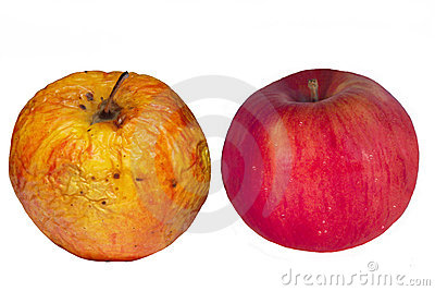 Isolated old & young apples. Concept.