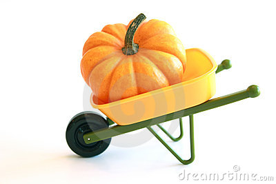 Isolated Orange Pumpkin in Wheelbarrow