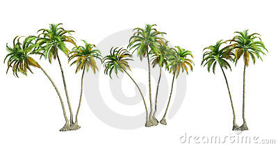 Isolated palm trees