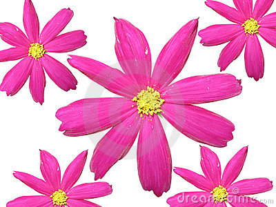 Isolated pink flowers