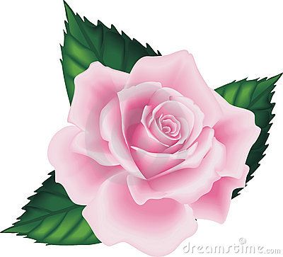 Isolated Pink Rose Leaf