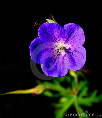 Isolated purple flower