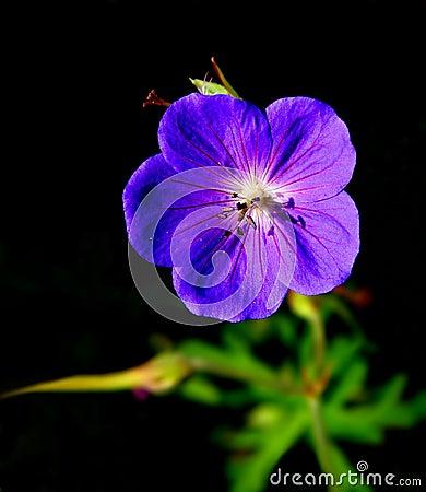 Isolated purple flower