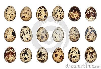 Isolated Quail Eggs