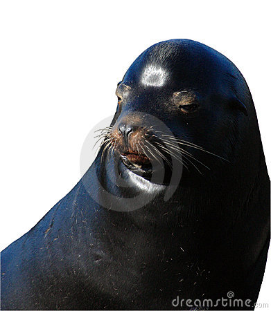 Isolated Seal Face