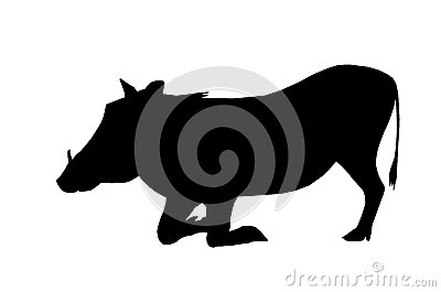 Isolated Silhouette Warthog on Knees