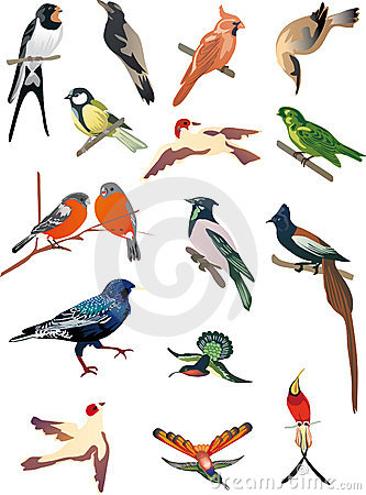 Free Isolated Small Birds Collection Stock Photography - 17586472