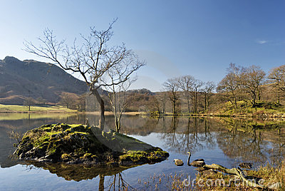 Isolated small tree on Rydal Water