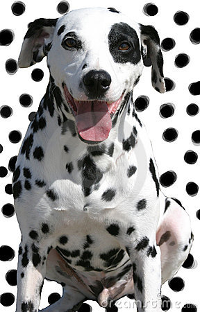 Isolated spotted dog on spotted background